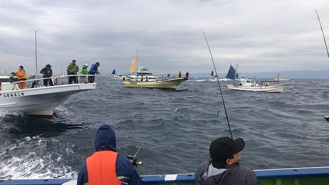 カツオ船団