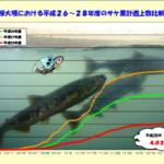 利根川のサケ(鮭・シャケ)の遡上数は2012年以降どうなっていたのか